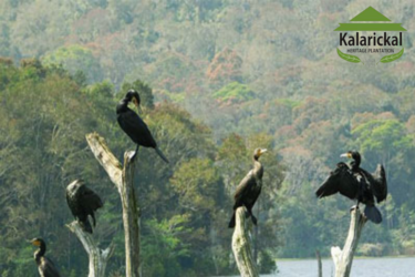 Bests homestays in Periyar - KH Plantation
